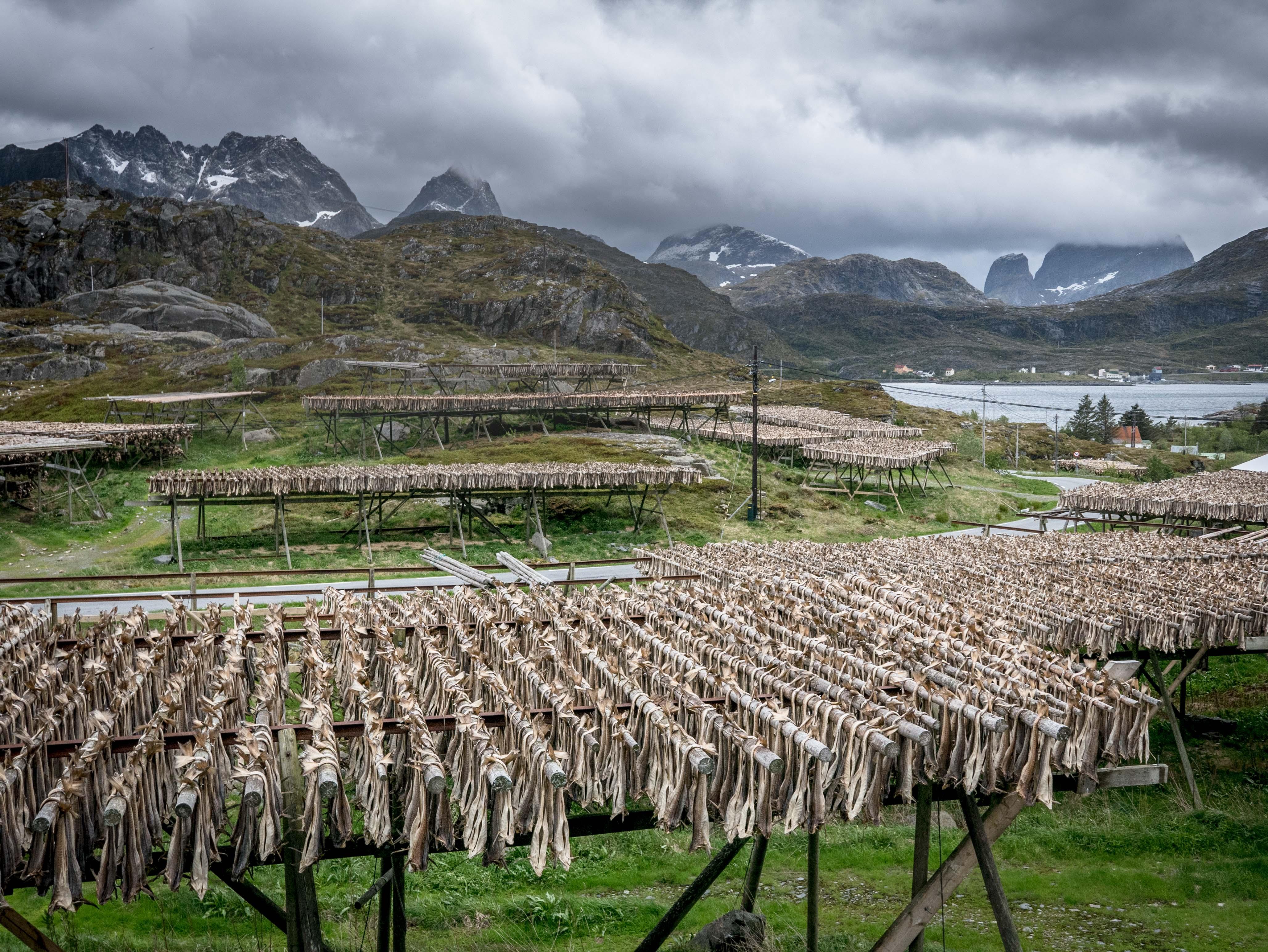 Lofoty, Norwegia, suszarnia dorszy