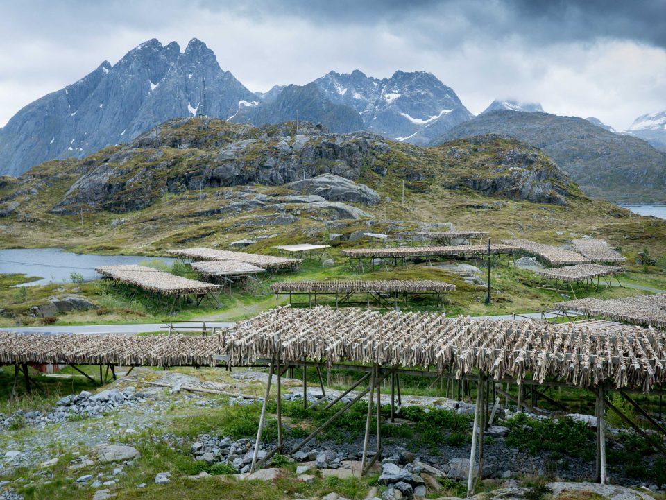 lofoty, góry, norwegia, dorsz sucszony, kawa w krzakach